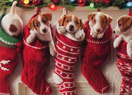 funny animal merry christmas pictures
