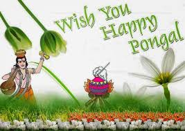 Pongal Wishes For Friends and Family