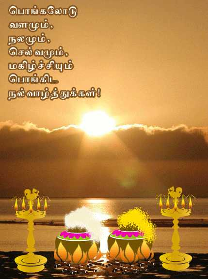 happy pongal 2017 greetings wishes sms images messages whatsapp status facebook status message in tamil