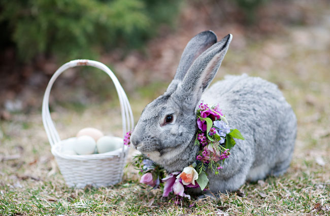 real easter bunny pictures